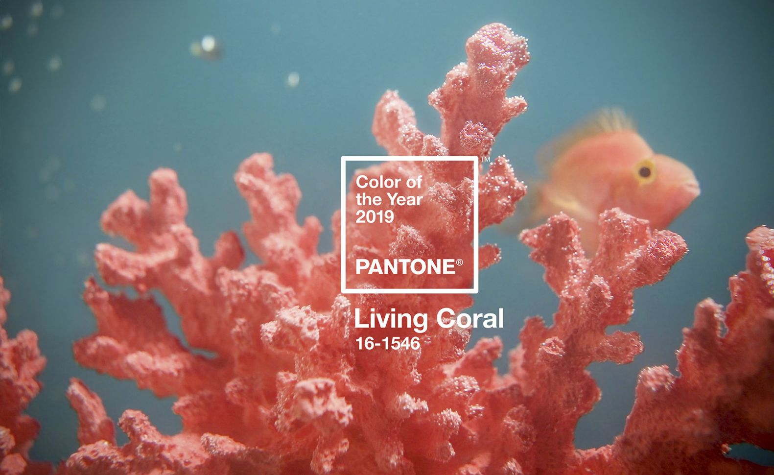 Color of the Year 2019: Living Coral.